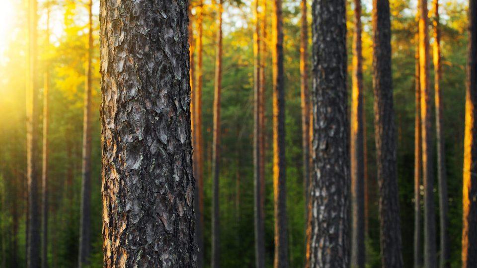Kestävän metsätalouden puolesta