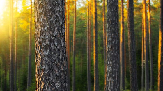 Sustainable Growth from the Forests