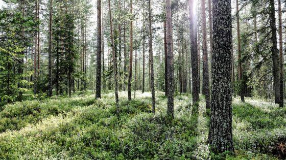 Metsissä on tulevaisuus