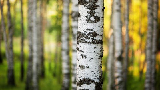 Työ metsien puolesta jatkuu