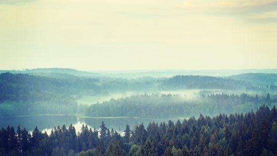Metsiä hoidettava kestävästi