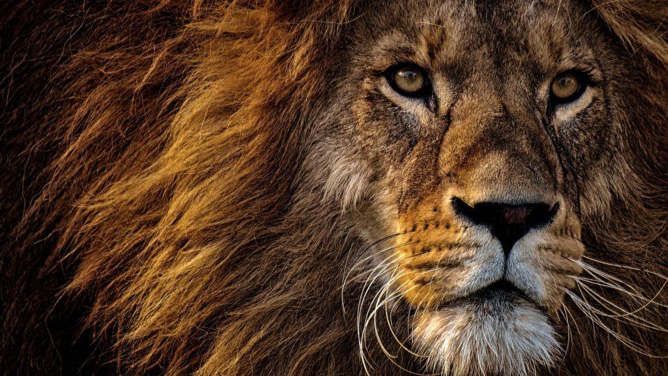 Leijona.