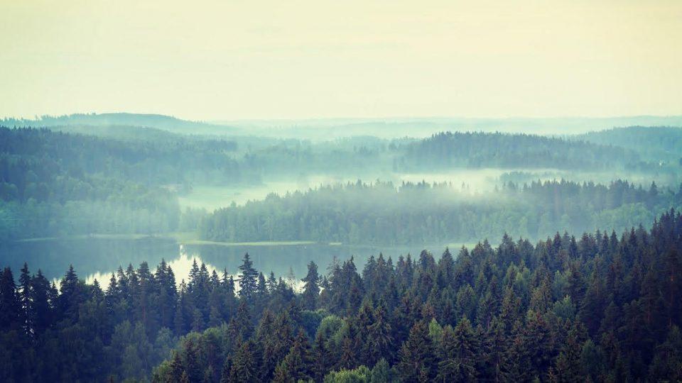 Tulevaisuuden näkymät siintävät metsissä