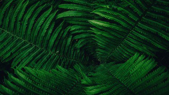 Kohti green dealia