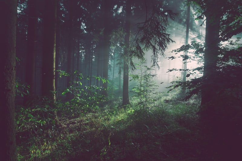 Hämärää metsämaisemaa. Taustalla näkyy auringonsäteitä.
